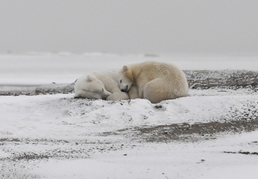 Arctic could have no ice in September, shocking study says