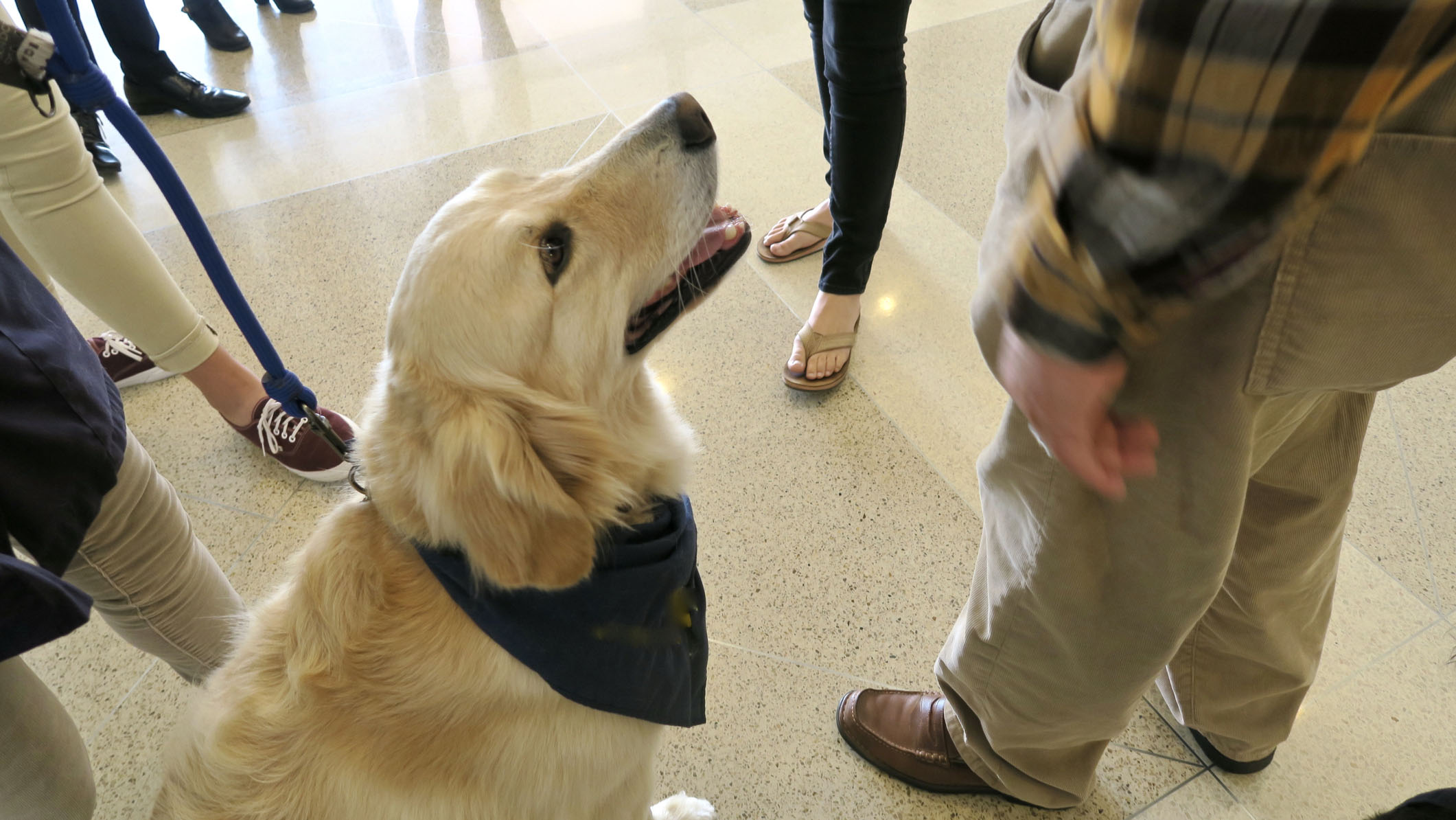 Westlake Legal Group therapy-dog Service dogs travel to El Paso to comfort victims and first responders: 'These dogs can reach places in the heart no human can' Michael Hollan fox-news/lifestyle/pets fox news fnc/lifestyle fnc article 10852f5e-00e7-5c2b-9ebe-69c9730989aa