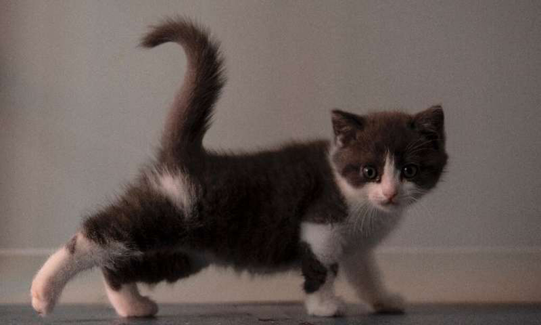 China creates first cloned kitten: 'Meets the emotional needs of young generations'