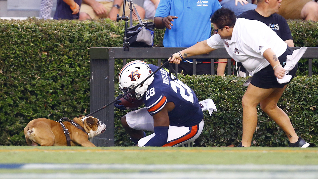 Auburn Tigers running back accidentally falls into Mississippi State dog mascot