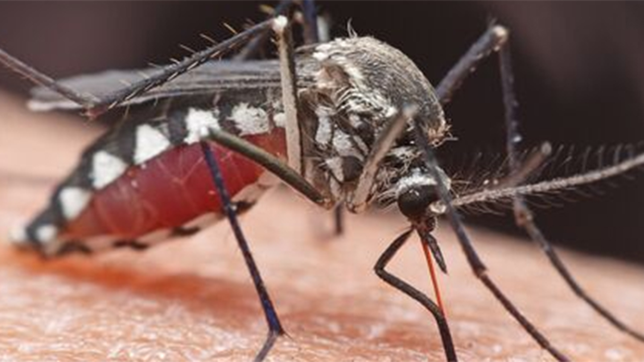 Westlake Legal Group Mosquito-EEE Michigan man went from 'perfectly healthy to brain dead' in 9 days after contracting rare mosquito-borne disease, report says Talia Kaplan fox-news/us/us-regions/midwest/michigan fox-news/us fox-news/newsedge/health fox news fnc/health fnc article 6471678b-b979-5ec8-b3c6-1a1cff5610de