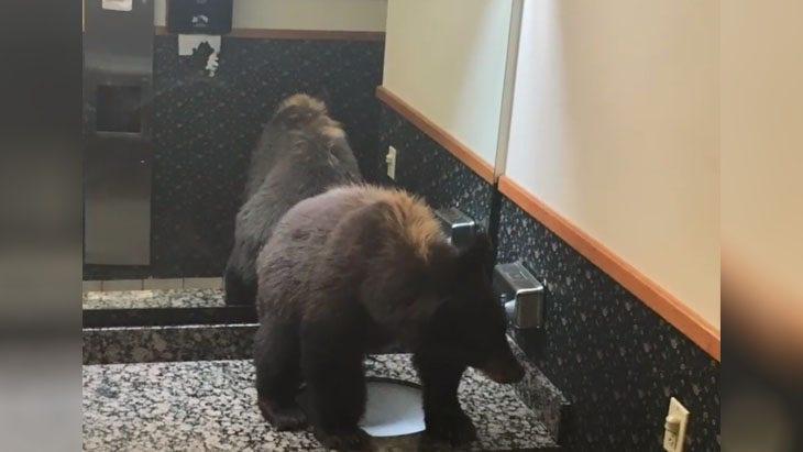 Westlake Legal Group bear-hotel-bathroom Black bear gets stuck in hotel's women's bathroom Michael Hollan fox-news/travel/general/hotels fox news fnc/great-outdoors fnc article 20c709db-309a-5614-978b-27f5c27b8a47