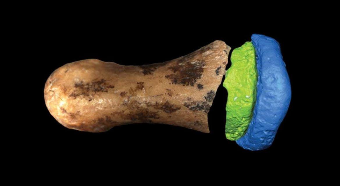 Ancient Denisovan finger bone seen as surprisingly 'humanlike,' scientists say