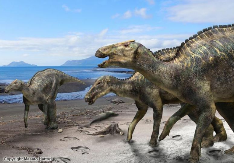 New duck-billed dinosaur, Kamuysaurus japonicus, discovered by scientists