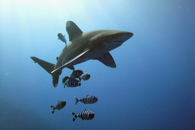 French woman loses both hands after shark attack in Polynesia: reports