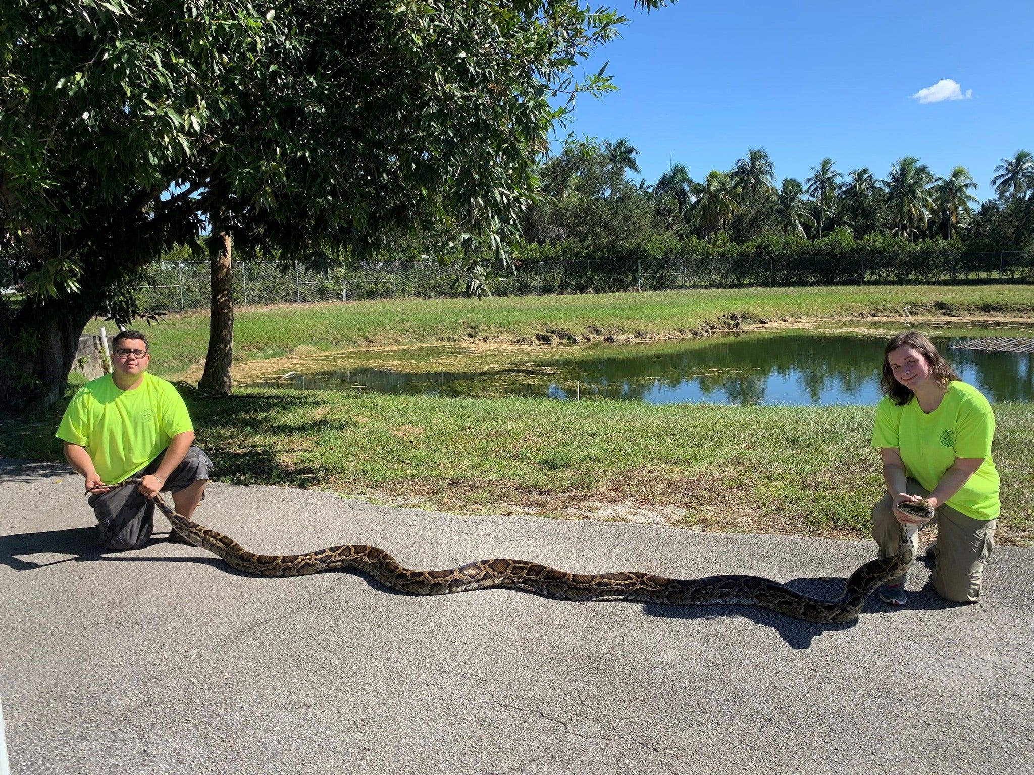 Florida wildlife officials capture 18-foot, 98-pound Burmese python