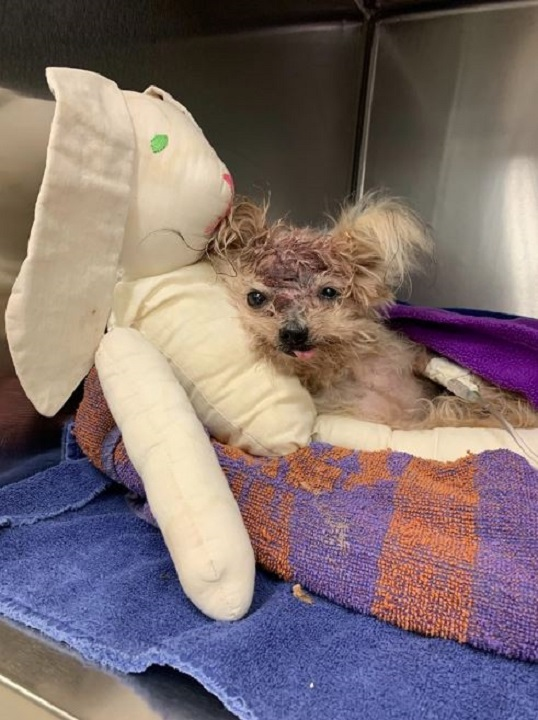 Yorkie named 'Pringles' dies after being found in trash can
