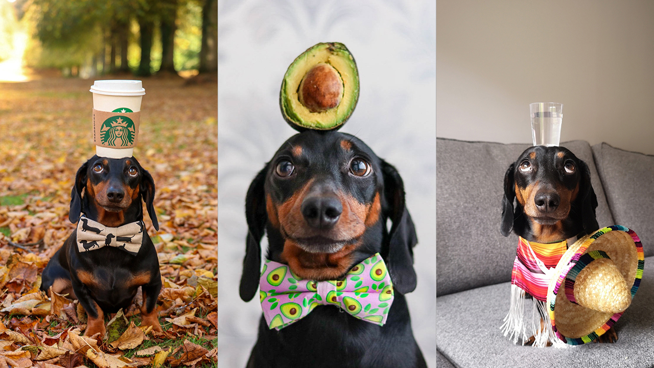 Dog becomes Instagram-famous for balancing objects on his head