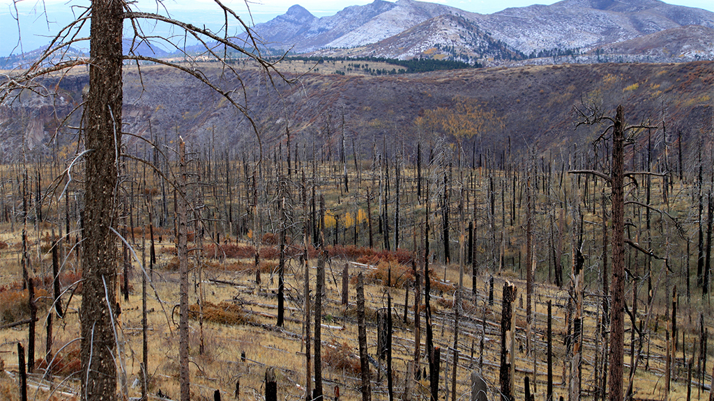 Wildfire threat sparks seed-collection projects to reforest charred hillsides