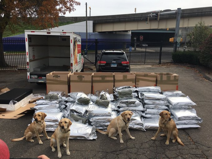 Connecticut police 'big dogs' sniff out 420 pounds of marijuana in U-Haul truck