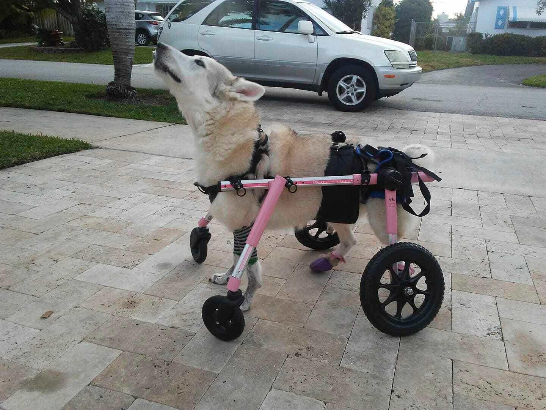 Florida-Tier-Rettungs-Gruppen starten verzweifelte Suche zu finden, behinderter Hund gestohlen, mit dem Auto
