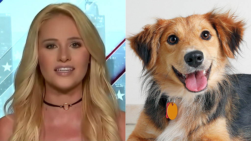 Westlake Legal Group lahren-puppy-FOX-iStock Tomi Lahren: Bill to protect animals brings Republicans and Democrats together Yael Halon fox-news/topic/fox-nation-opinion fox-news/opinion fox-news/fox-nation fox news fnc/media fnc e9649276-c3cc-5c5c-a75d-1df051084ac9 article