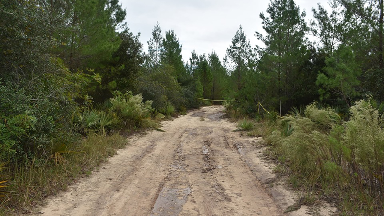 Florida hunter discovers human remains at Ocala National Forest: Smelled 'like death'