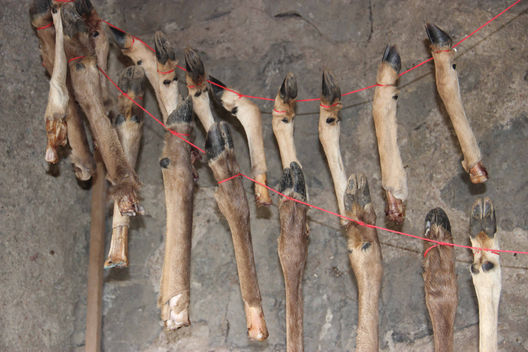 400,000 years ago, ancient humans ate bone marrow using the bones as 'cans'