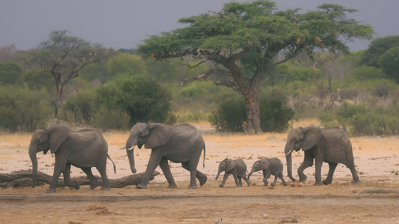 Severe drought in Zimbabwe kills more than 200 elephants, other wild animals: officials