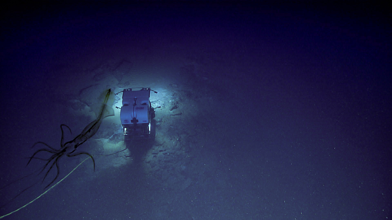 Creepy photo shows giant squid 'watching' deep sea mission