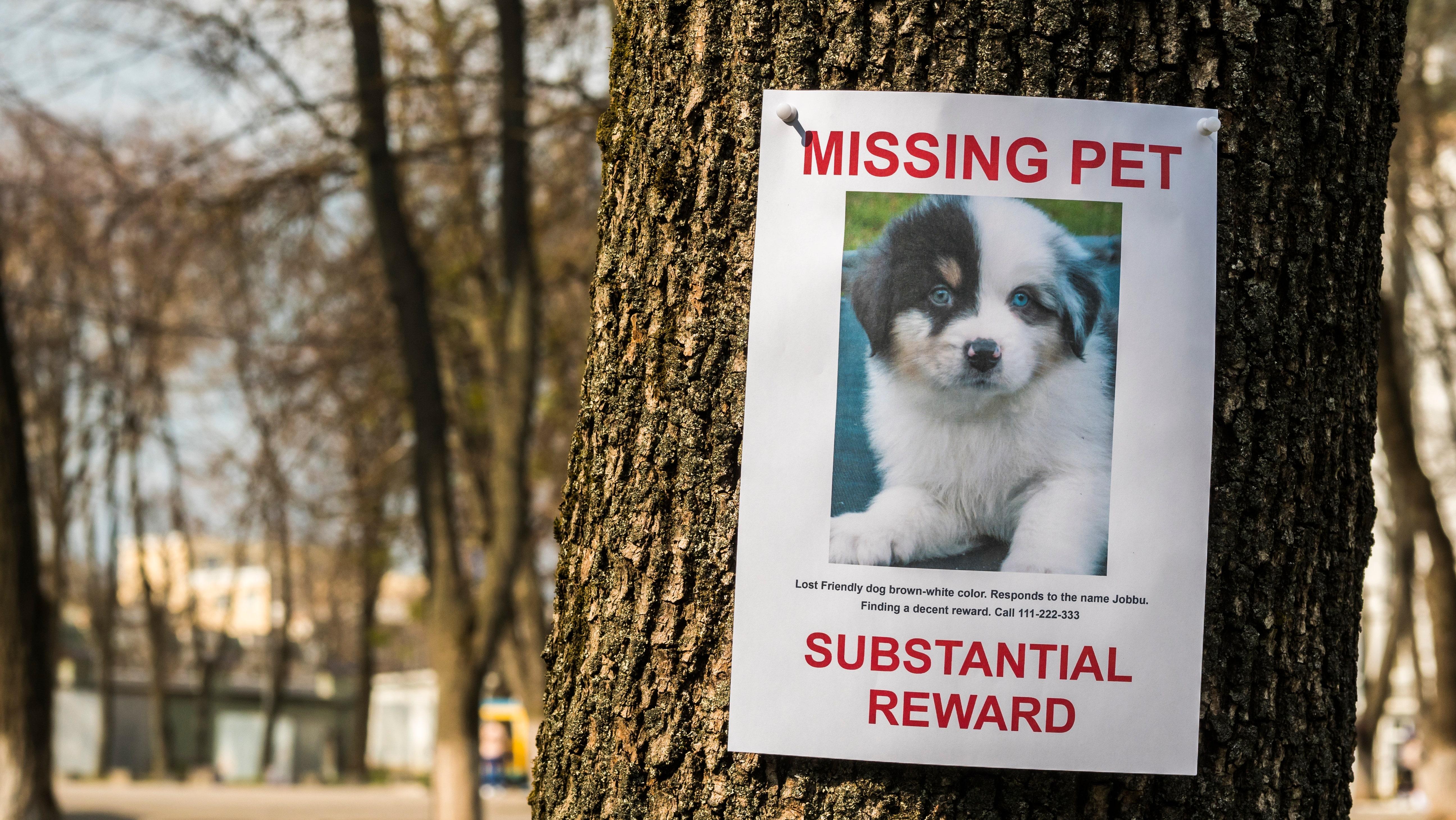 の探し方を紛失してしまったの犬によると、ペット探偵