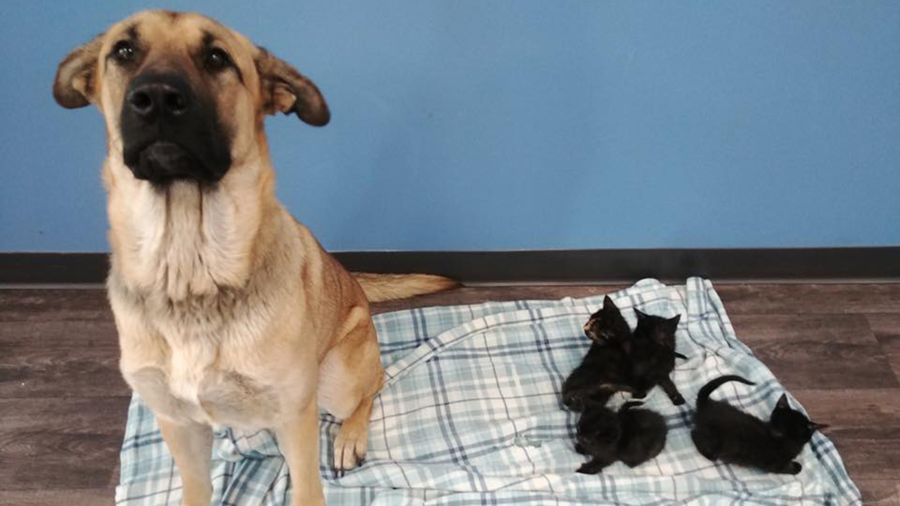Dog found shielding kittens from cold on side of Canada road, shelter says
