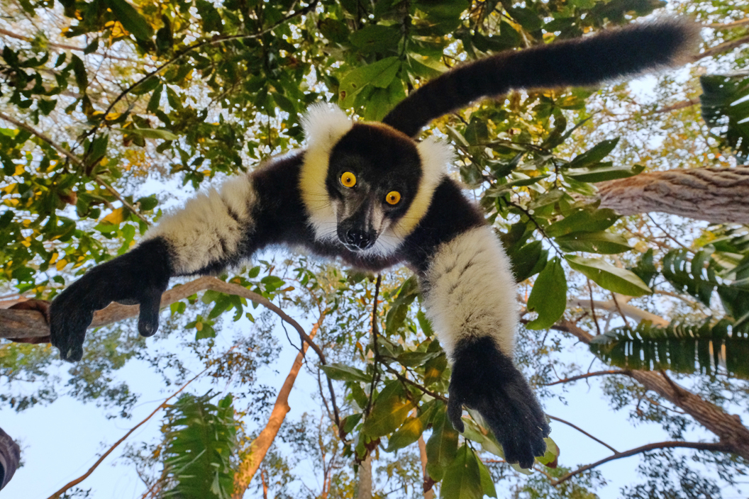 Amazing pictures show lemur trying to steal photographer's camera