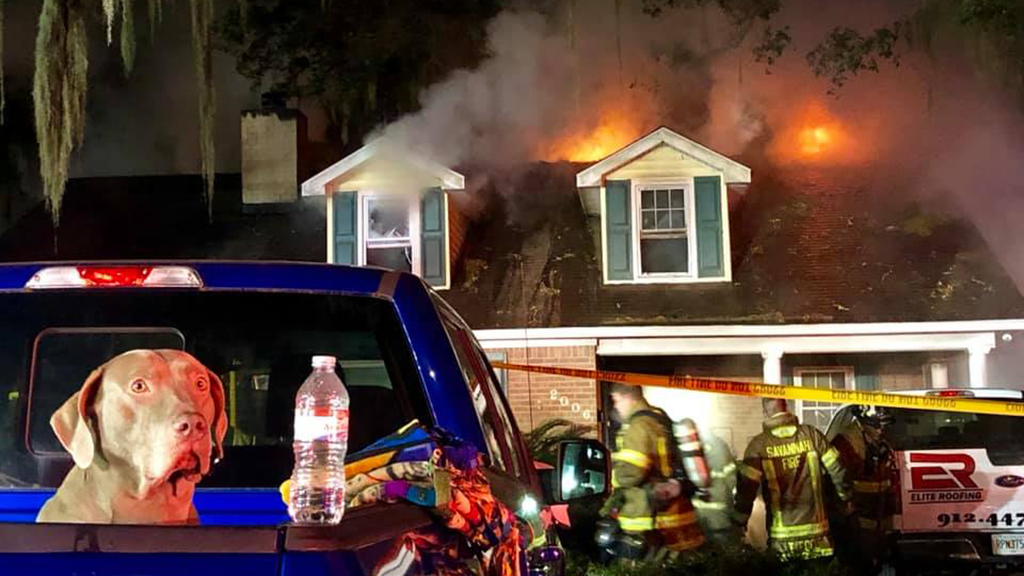 Fire Savannah Fire Rescue - Sammy the dog barks alarm, saving Georgia family from fire inside home