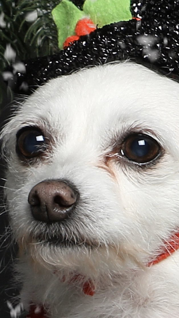 Christmas photo of dog suffering 'existential crisis' goes viral on Twitter