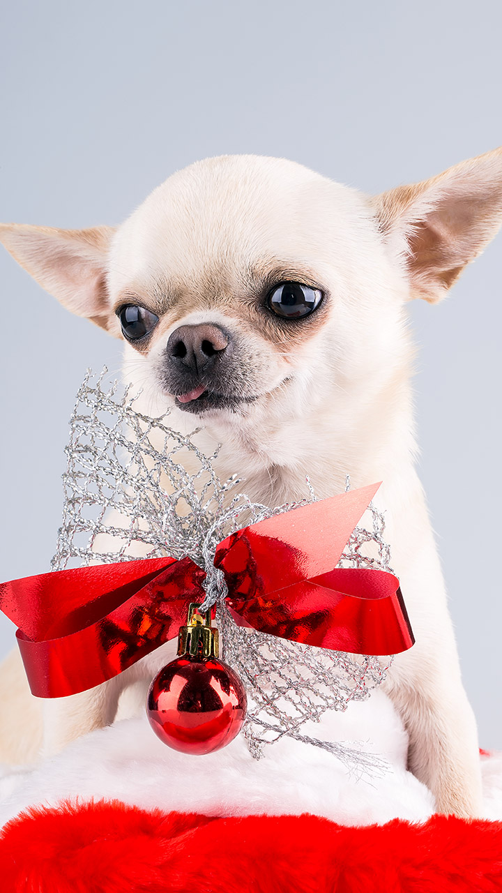 Westlake Legal Group dog Christmas photo of dog suffering 'existential crisis' goes viral on Twitter Janine Puhak fox-news/lifestyle/pets fox-news/lifestyle fox news fnc/lifestyle fnc article a6ec805f-b9d8-58bc-98c0-0eddfa11b3cd /FOX NEWS/LIFESTYLE/OCCASIONS/Holiday
