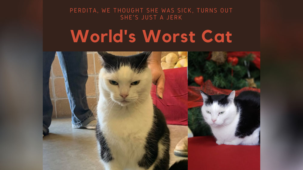 North Carolina animal rescue posts brutally honest cat adoption ad: 'She's just a jerk'