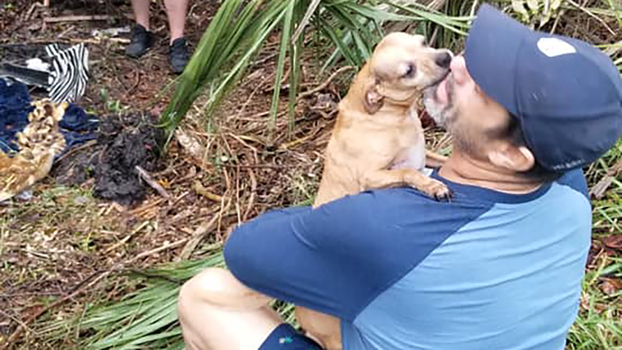 Florida pemilik anjing reuni dengan Chihuahua hilang selama berhari-hari setelah Malam Tahun Baru kecelakaan mobil