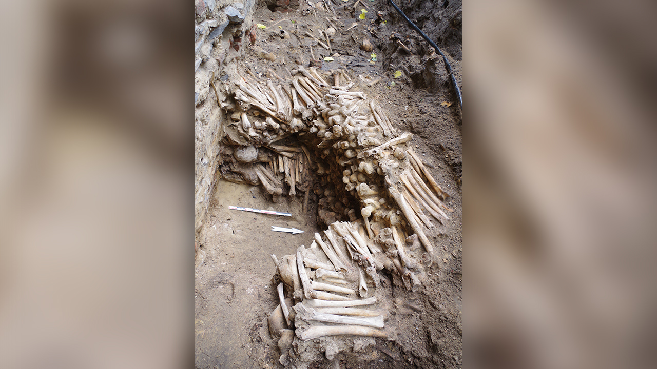 Wall made from human bones and skulls, believed to be nearly 500 years old, found near Belgian cathedral