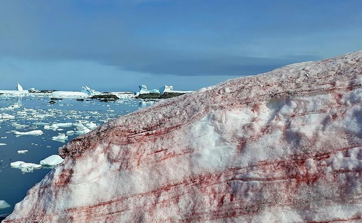 Weird 'watermelon snow' pics show Antarctic turning red