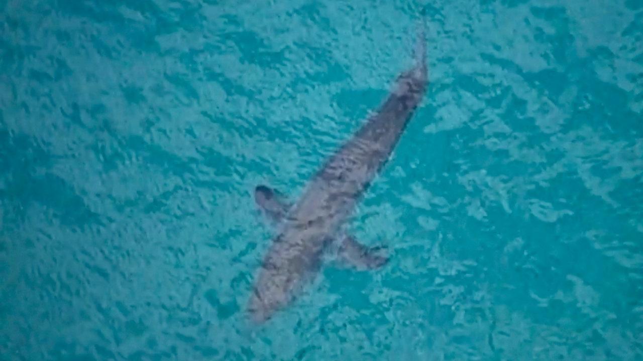 Người phụ nữ Úc hét lên 'Tôi vẫn yêu cá mập' sau khi bị một người tấn công