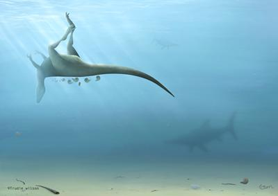 New species of dinosaur related to Tyrannosaurus rex discovered