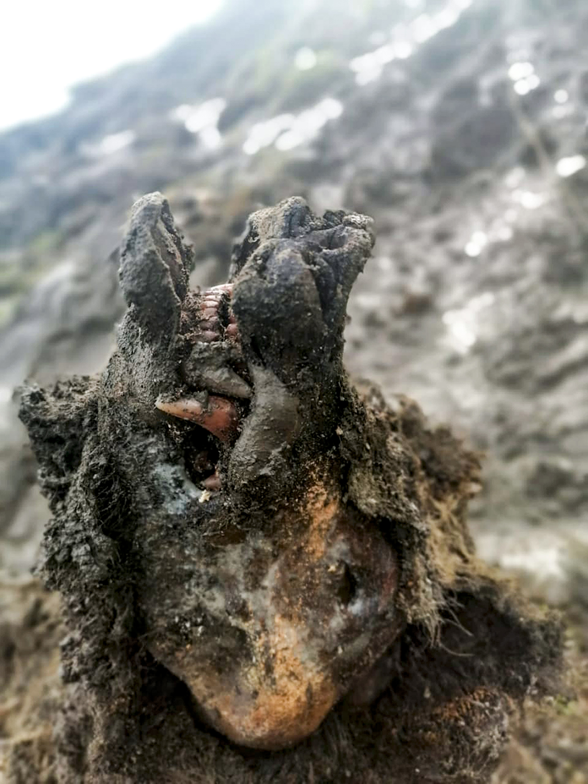 Perfectly preserved prehistoric cave bear discovered on Russian Arctic island