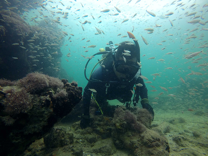 19th-century Maya slave ship wreck discovered off Mexico