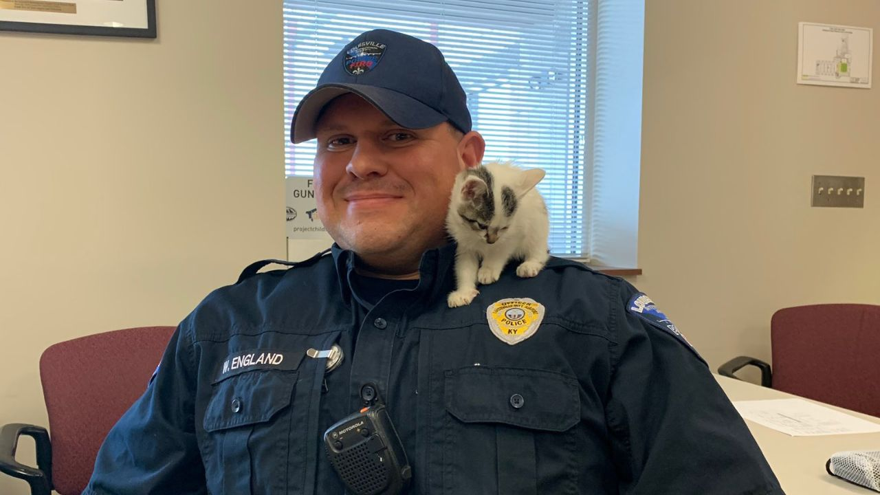 Stray kitten at airport named Boeing, adopted by safety officer - fox