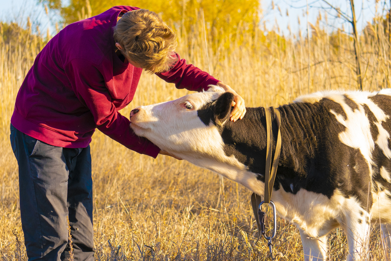 Cow-hugging, an alleged wellness fad, has people cuddling farm animals to relieve stress - Fox News