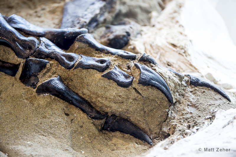 T. rex and triceratops fossils unearthed in ferocious battle, to be displayed for first time - Fox News