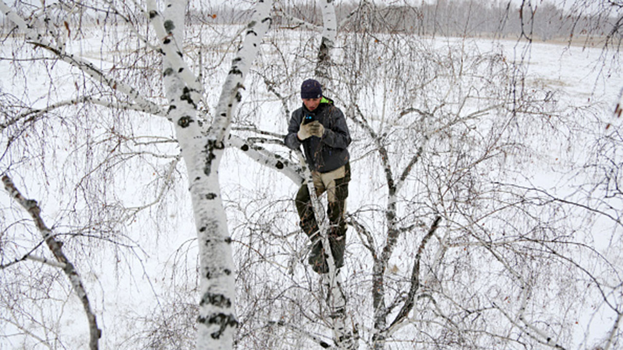 Siberian student climbs tree to access internet for remote learning in rural village