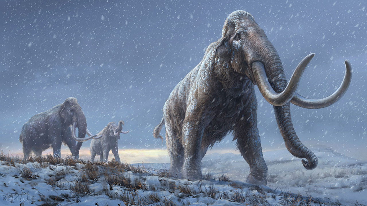 Million-year-old Siberian mammoth DNA breaks record for oldest sequenced