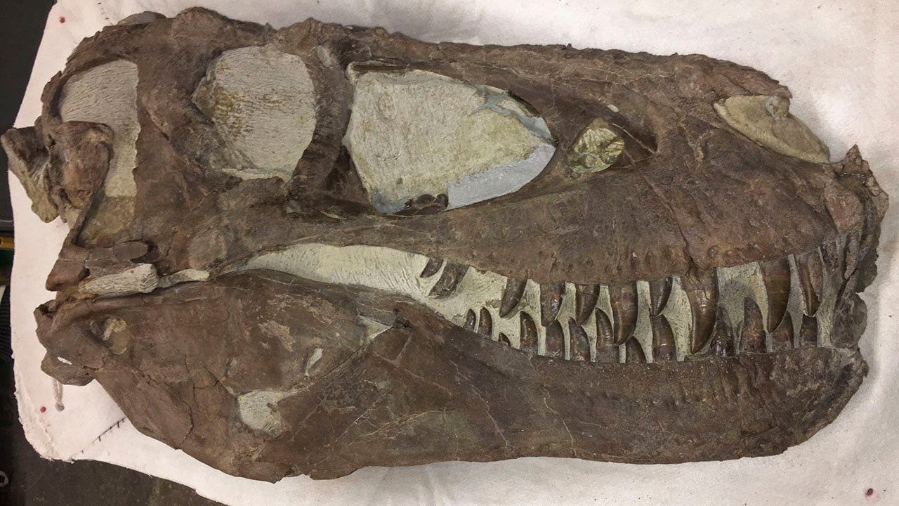 Fossil site may prove tyrannosaurs lived in packs