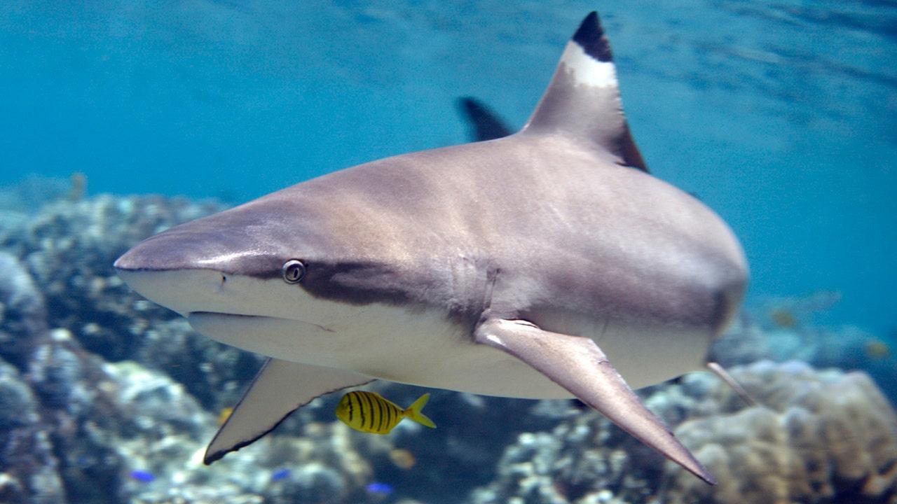 Hawaii girl, 6, details scary shark encounter: 'My soul left my body'
