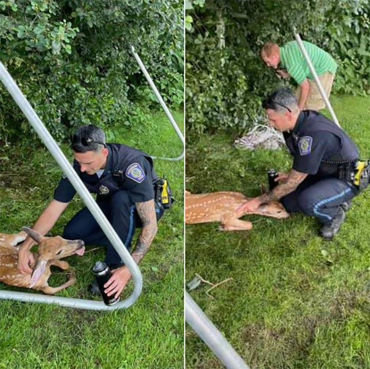 Police officer rescues deer caught in soccer net