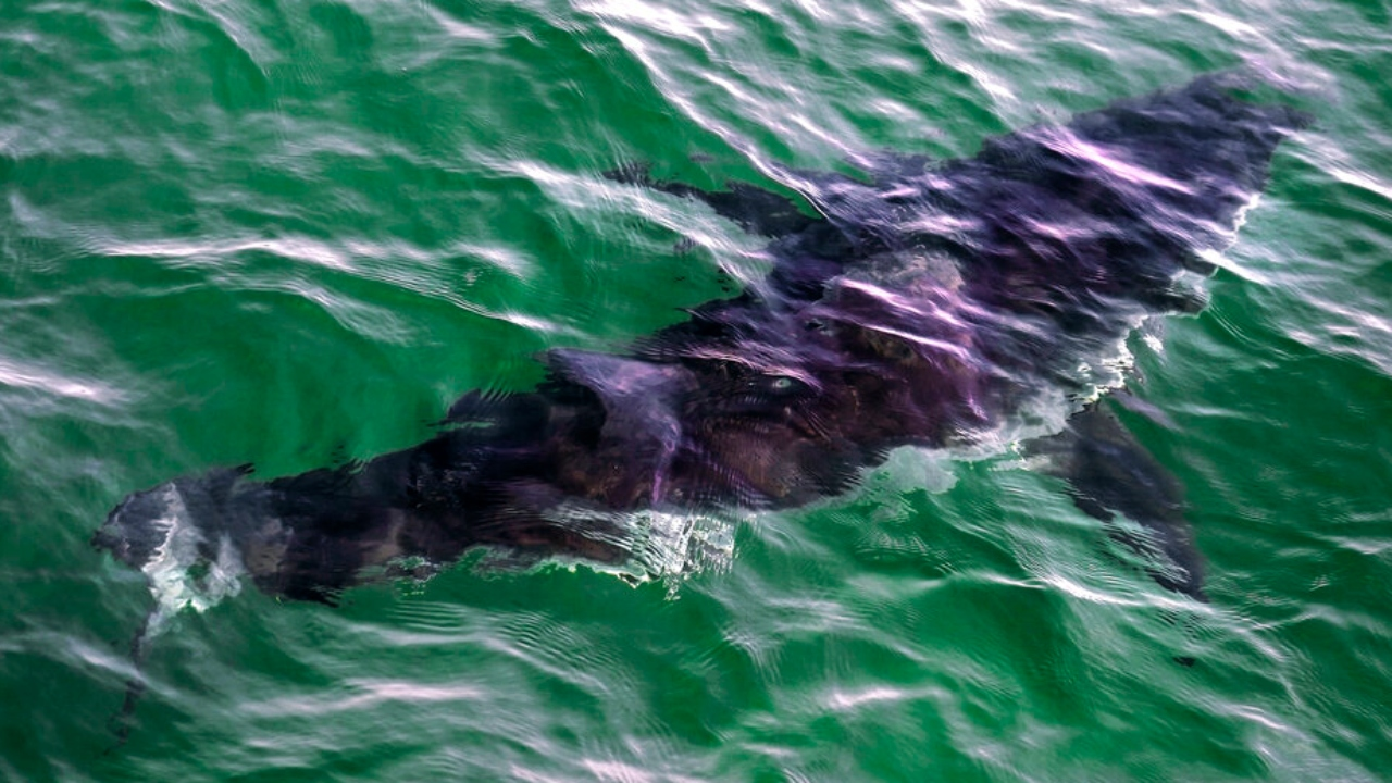 More than a third of shark species threatened with extinction