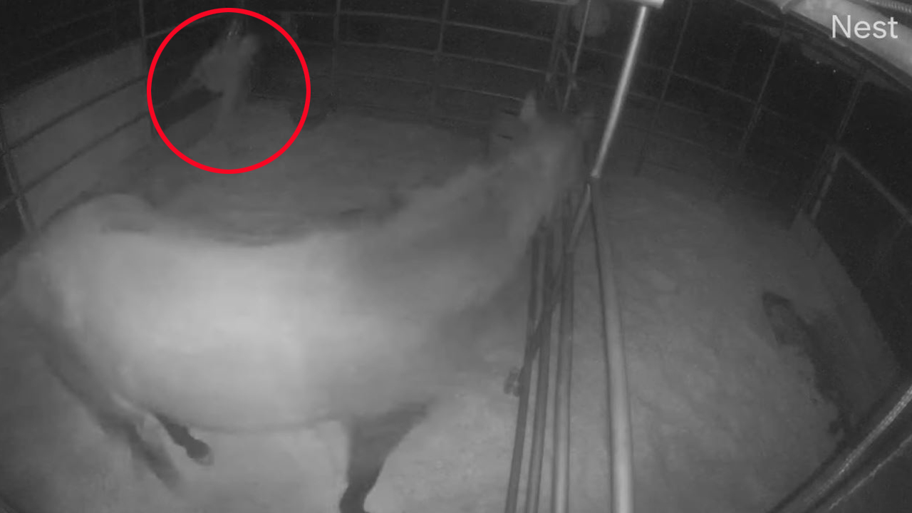 2 suspects in Arizona caught on camera abusing elderly horses, owners seek answers