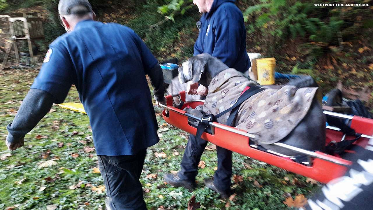 Injured Great Dane stuck in embankment rescued by Oregon firefighters