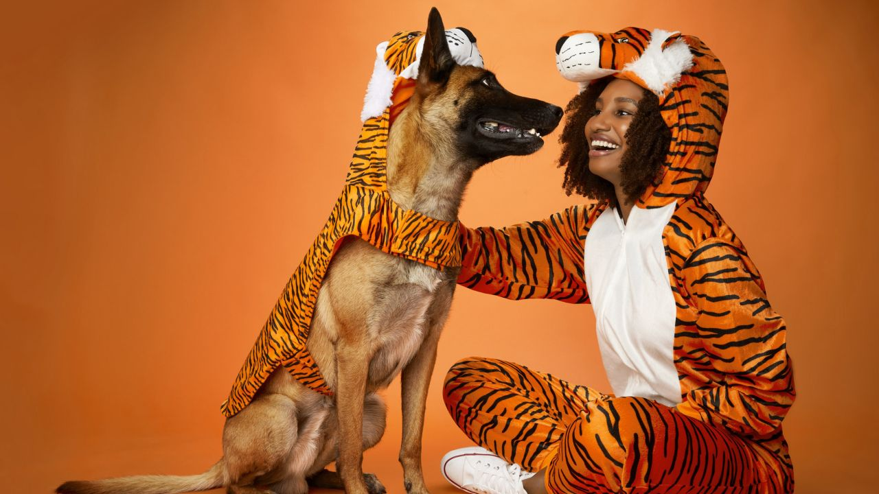 5 Halloween pet costume ideas that are quick and easy to put together