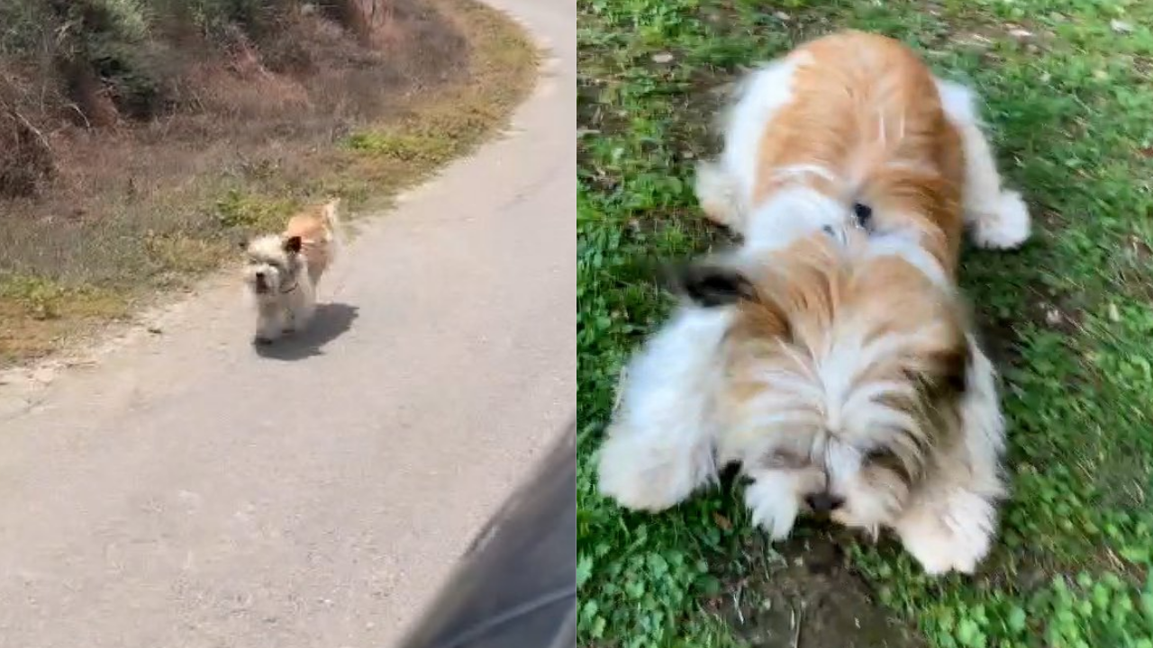 Couple adopts abandoned dog after noticing she was chasing their car