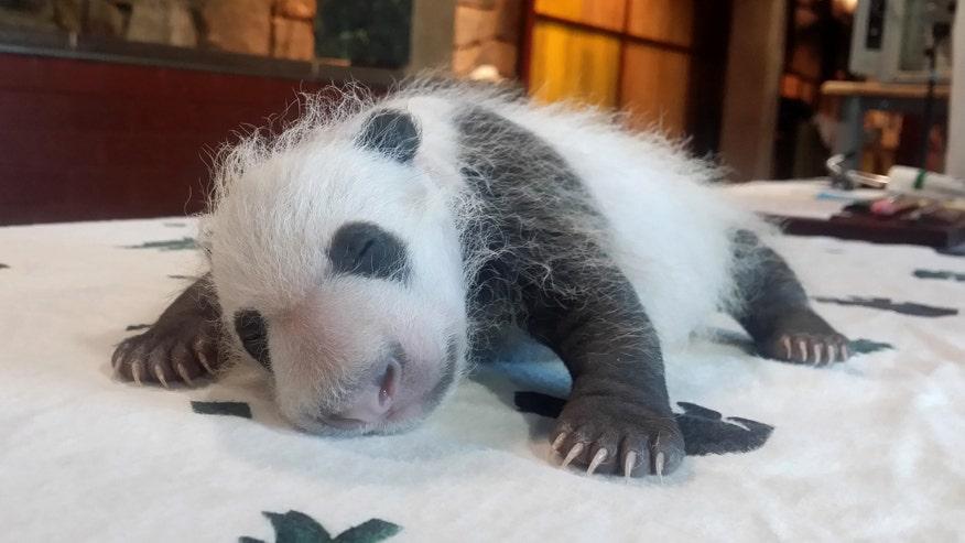 PandaBeiBei.jpg