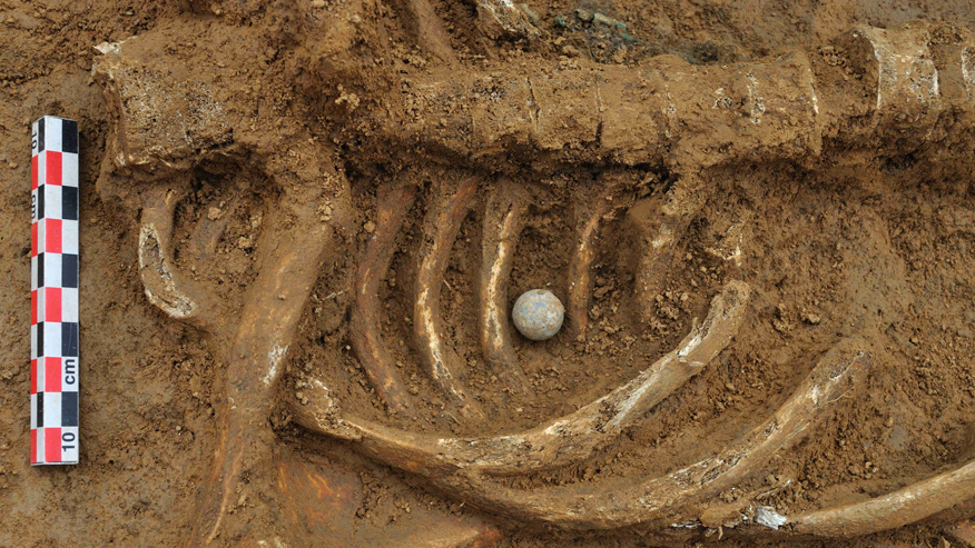 First complete Battle of Waterloo skeleton identified as German soldier
