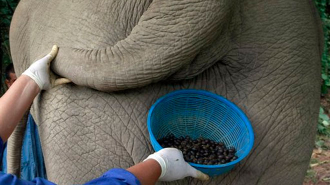 elephant_dung_coffee.jpg
